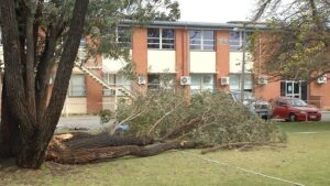 In. the background is the double story school building and car park. In the front is the tree, and the branch lying on the grass